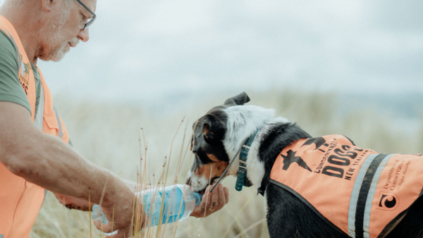 K9 Weed Detection_john and his dog wearing department of conservation vest jacket - conservation dogs new zealand