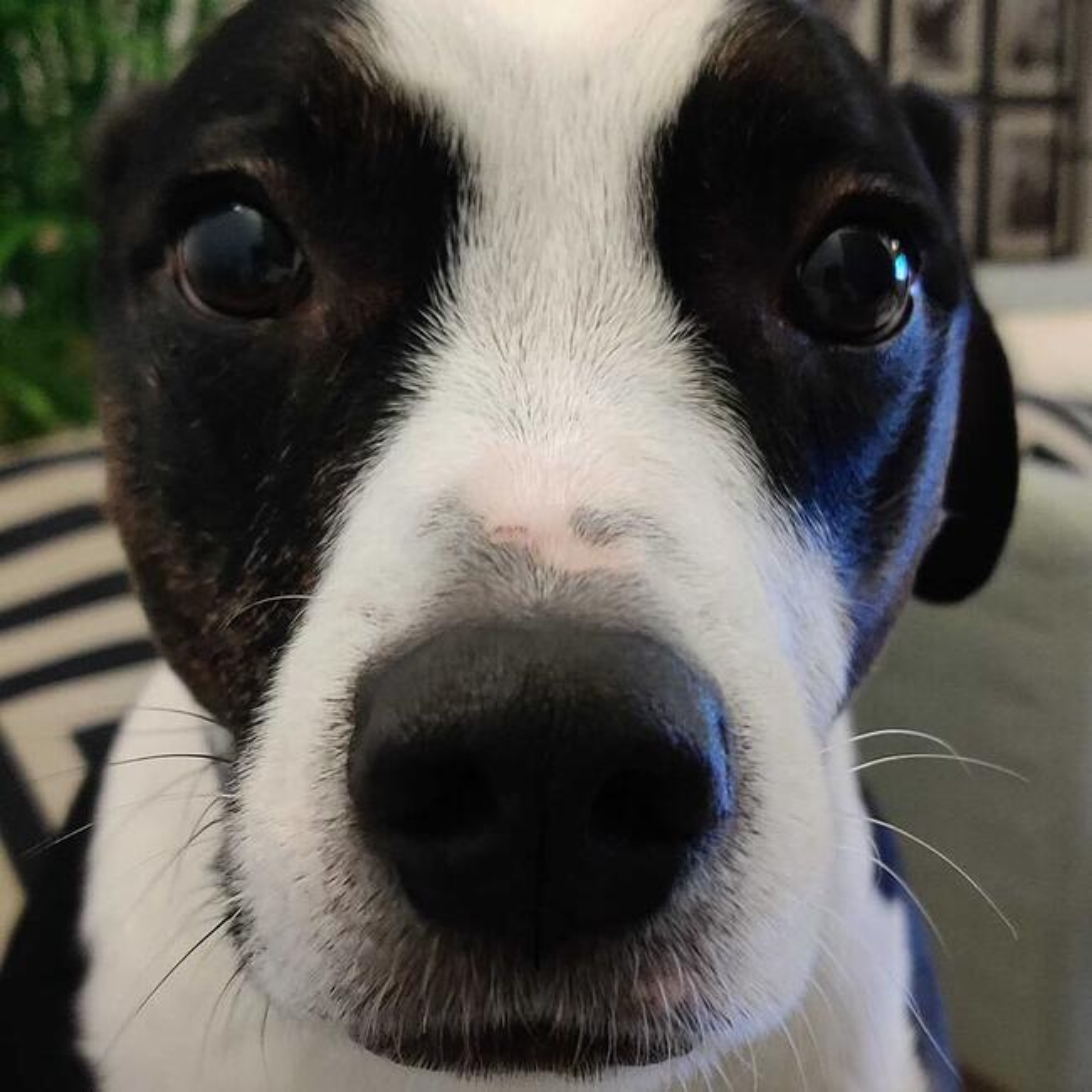 Extreme close up of Marta's black and white dog, Nala