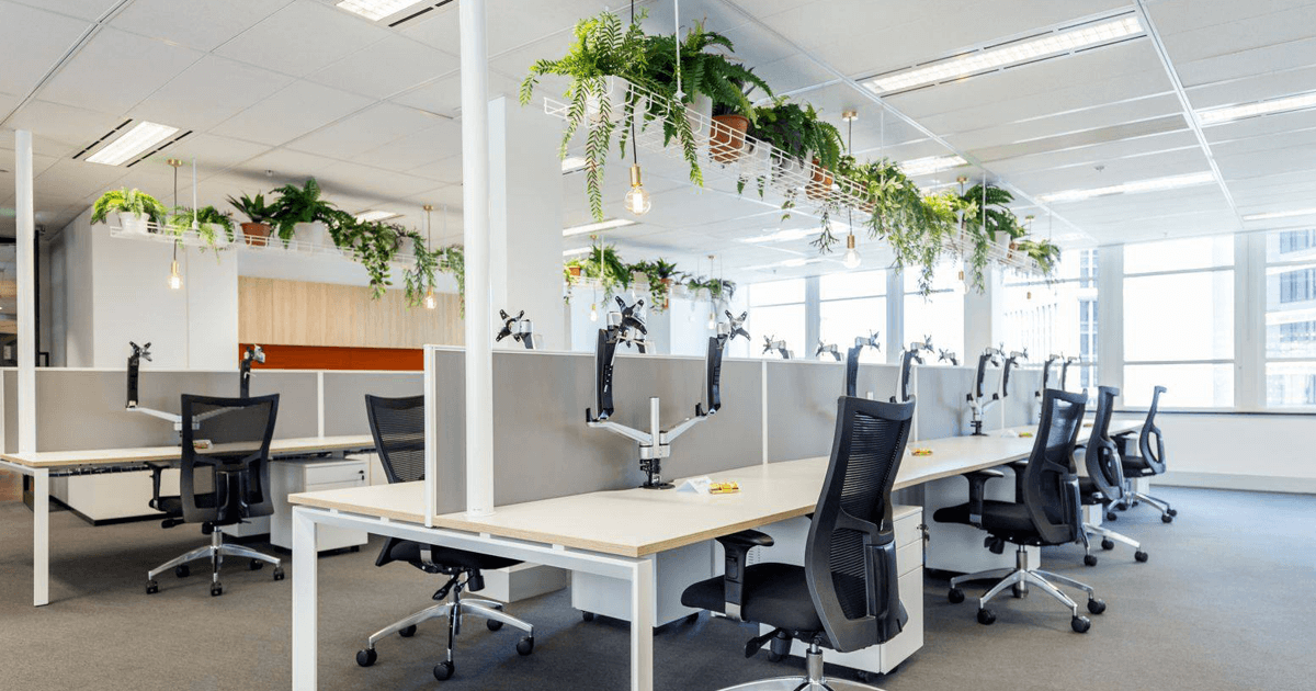 case study_illuminar_illuminar electrical work in an office with hanging plant feature