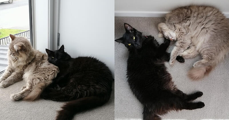 Andrews two cats spooning and playing
