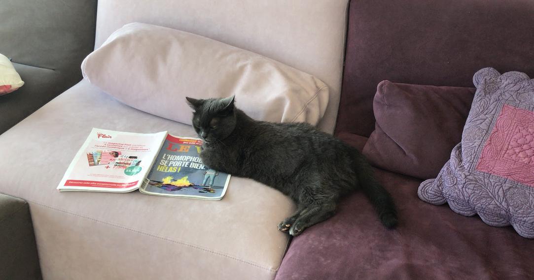 black cat lying on couch with a french magazine